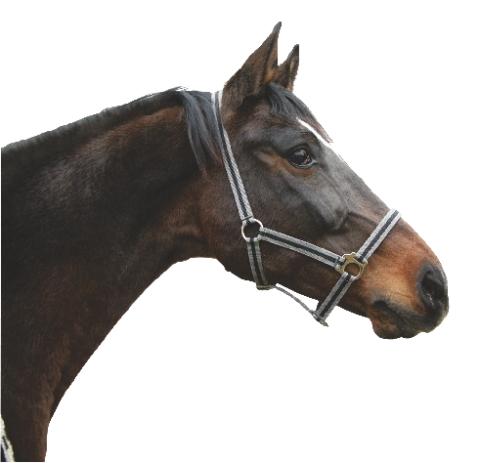 Ohlávka pro koně nylonová Hippo různé barvy a velikosti