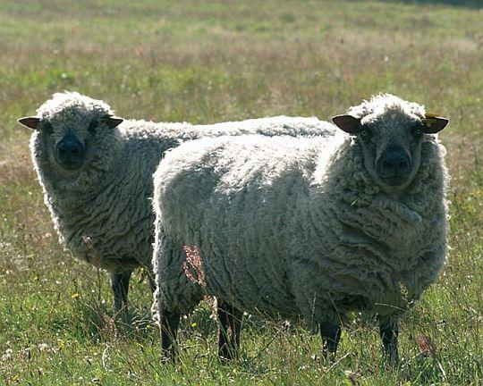 Sada na elektrický ohradník pro ovce 500 m