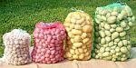 Rašlový pytel 35 x 50 cm (5 kg) balení 100 ks na brambory, zeleninu a ovoce