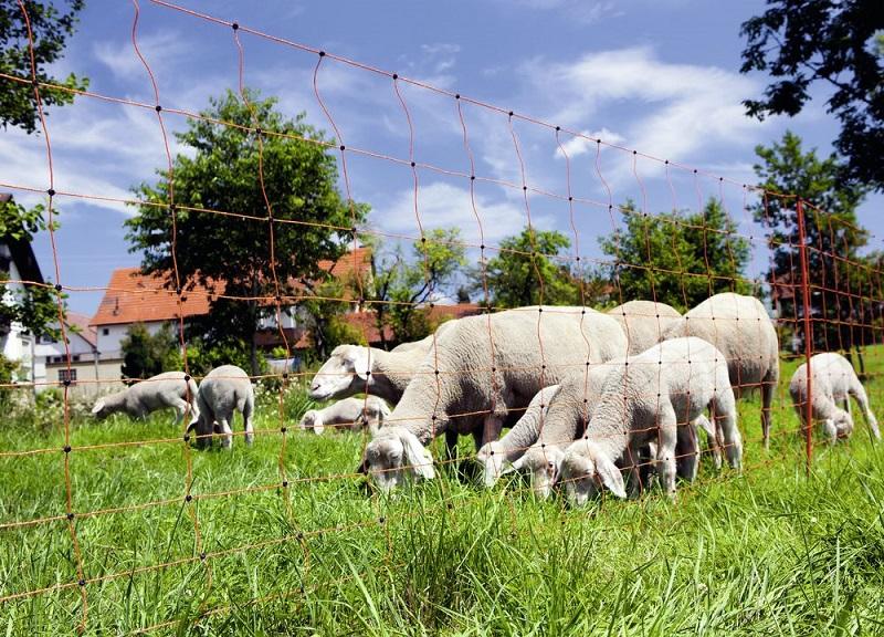 Sada na elektrický ohradník pro ovce 200 m s ovčí sítí